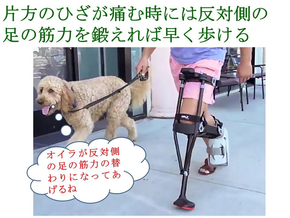 ひざが痛くても反対のひざを伸ばす筋力を鍛えれば早く歩ける