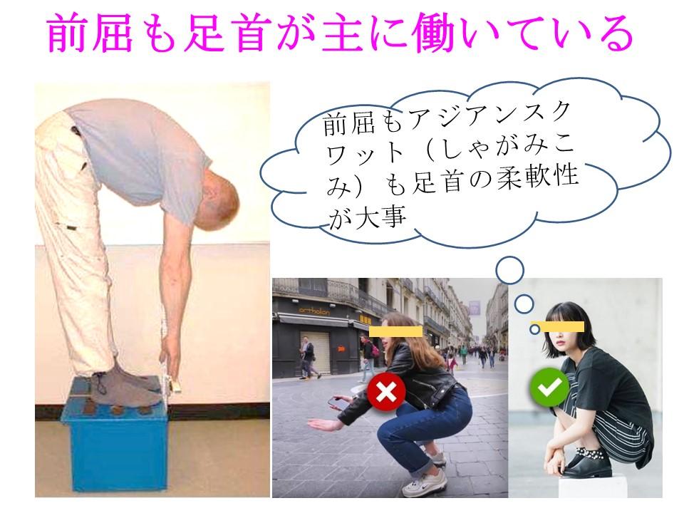 前屈テストは背骨よりも足首の柔軟性を反映している